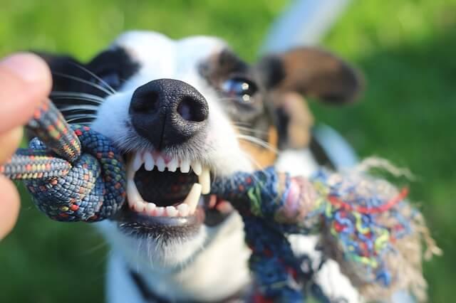 נשיכות כלבים ואחריות בעלי כלבים