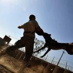 כלב נובח – לפעמים גם נושך ופוגע
